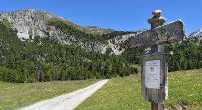 Wanderung von Lü nach S-charl. Vom Val Müstair ins Unterengadin. Der Weg führt durch den höchstgelegenen Arvenwald Europas «God Tamangur» im Val S-charl. Route: Lü, Alp Champatsch, Pass da Costainas / Costainaspass, Alp Astras, Plan d'Immez, S-charl