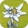Wander-App: Alpenblumen Finder – Die besten Apps für Wanderungen