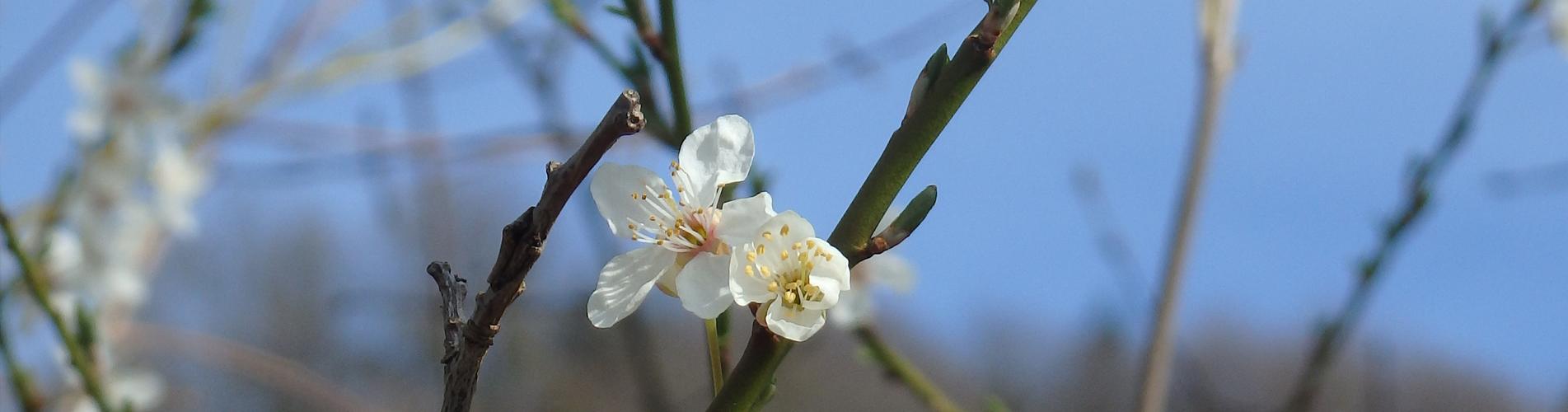 Frühlingswanderungen