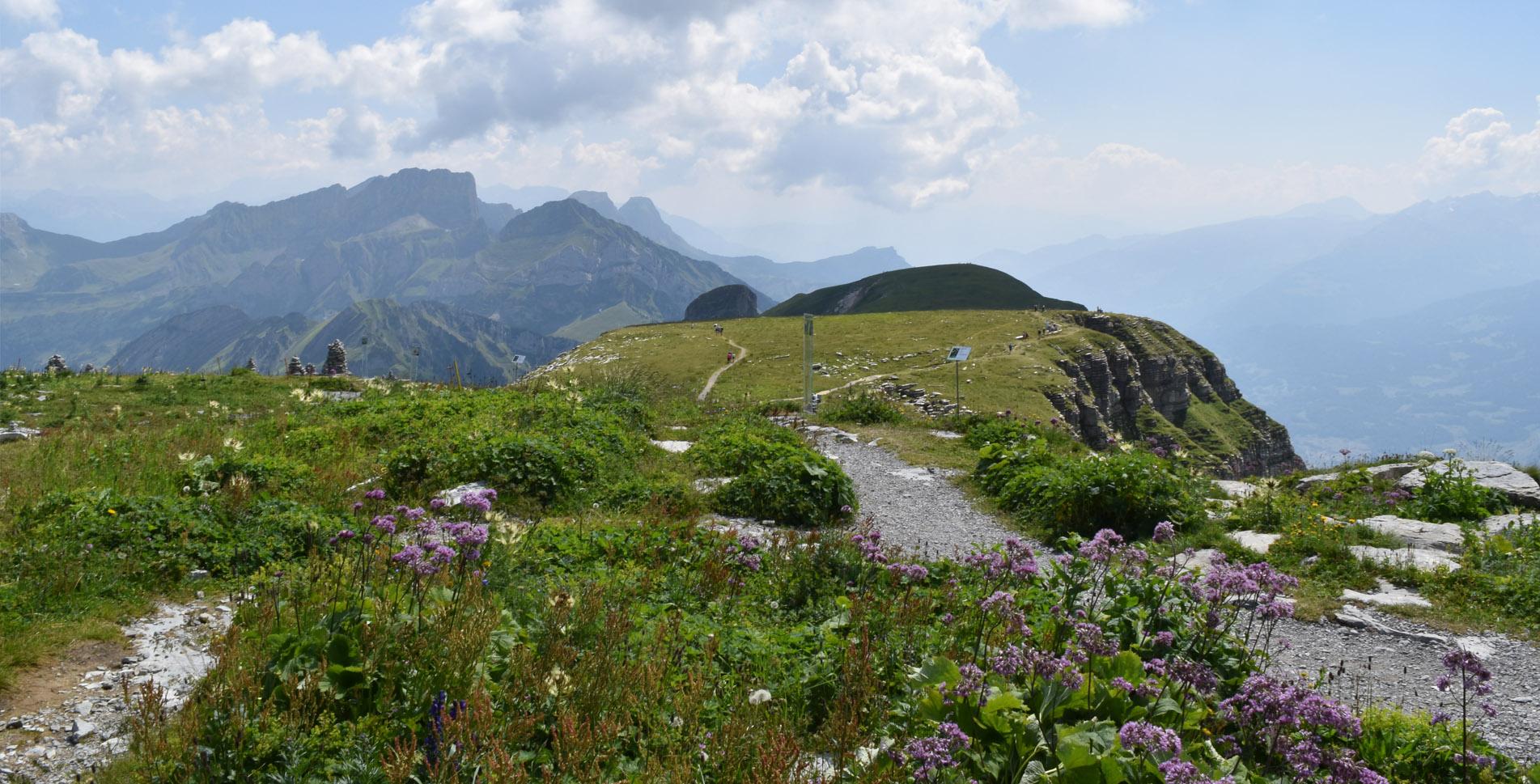 Wanderung vom Chäserrugg (Churfirsten), oberhalb Unterwasser, via Sattel zur Gamsalp, oberhalb Wildhaus im Toggenburg