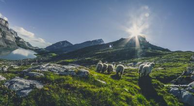 Wanderklassiker: Gemmi – Daubensee – Engstligenalp