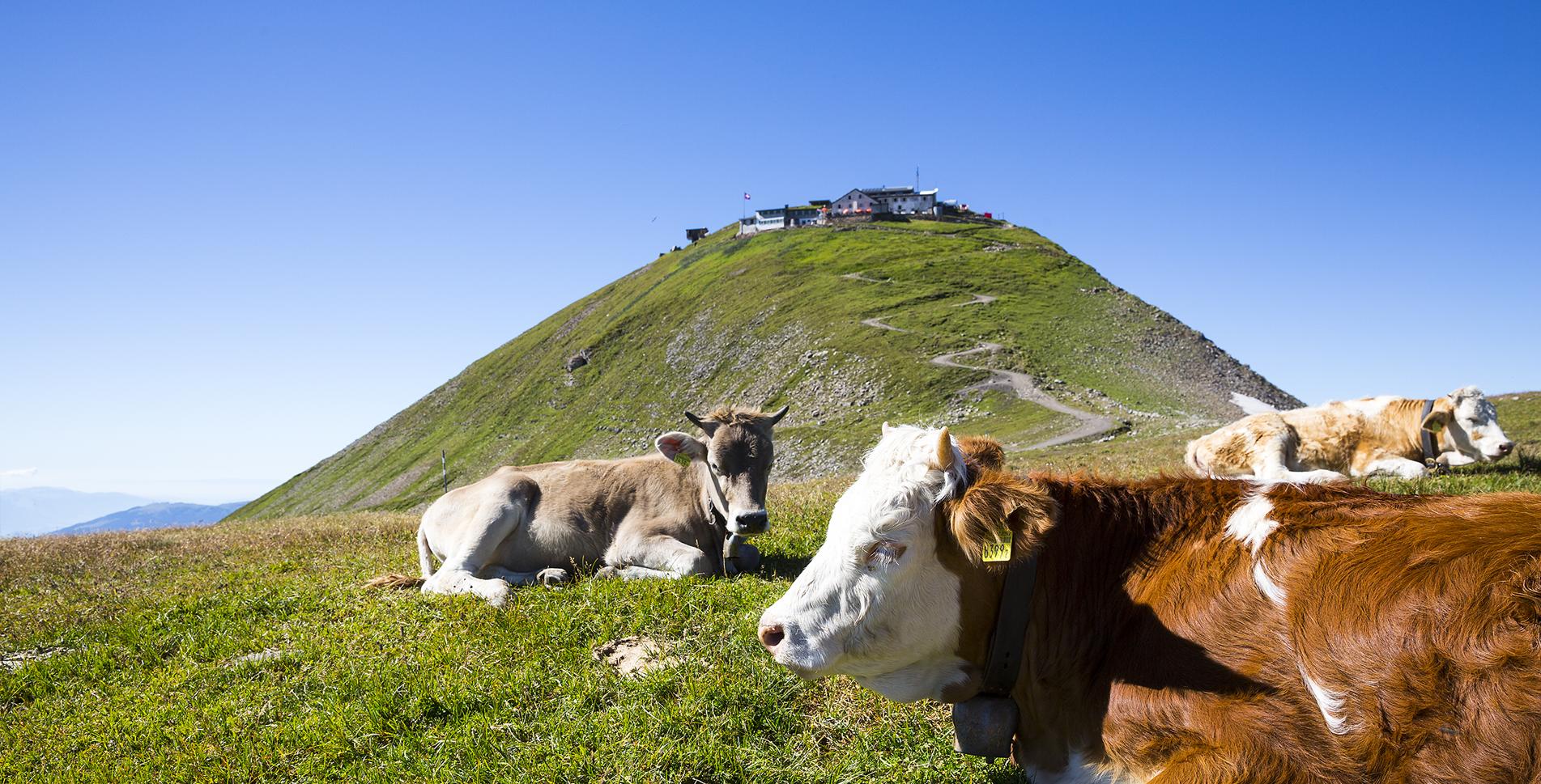 Berghotel Faulhorn, Grindelwald