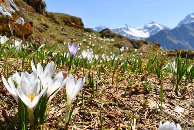 Rundwanderungen und Rundwege im Frühling. Auf zu schönen Rundwanderwege und den Frühling geniessen.