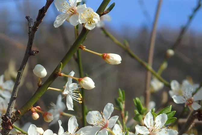Frühlingswanderungen und Wanderwege im Frühling. Wanderungen und Wandern im Frühling.