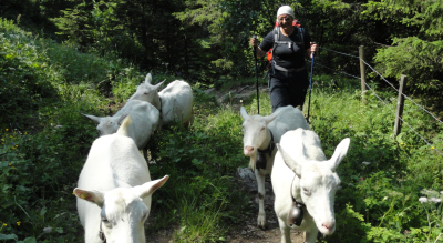 Wanderung: Lauenensee – Iffigenalp