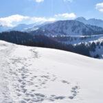 Grüsch Danusa (Schwänzelegg) Schneeschuhtour