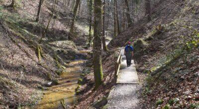 Stonehenge im Säuliamt (Knonaueramt): Wanderung von Hedingen zum Steinkreis im Bislikerhau und via Bisliker Weiher, Hedinger Weiher wieder zurück nach Hedingen