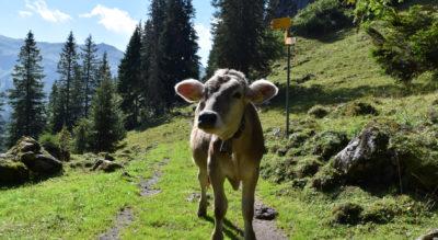 Wanderung im Hoch-Ybrig Gebiet von Laucheren (Steinboden) via Fuederegg, Roggenhütte auf den 1776 Meter hohen Roggenstock und weiter via Alpwirtschaft Roggenegg, Tubenmoos nach Oberiberg