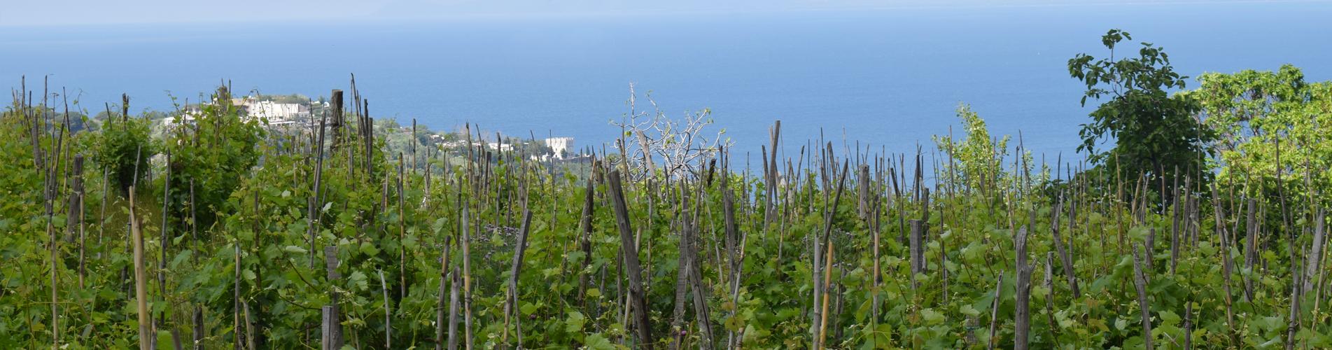 Wanderferien in Ischia und übernachten im Casa Di Meglio in Casamicciola Terme