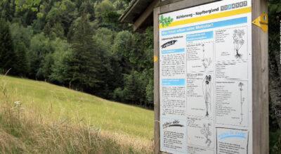Wanderung im Entlebuch von Romoos nach Bramboden auf dem Themenweg «Köhlerei Romoos»
