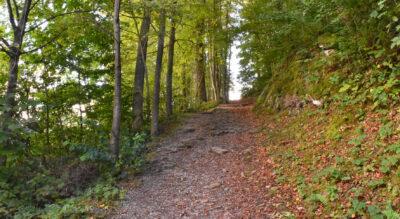 Wanderung auf dem Kastanienweg Murg am Walensee hinauf Richtung Murgtal mit Feuerstellen und Spielplatz, unterwegs lassen sich essbare Marroni (Edelkastanien) sammeln