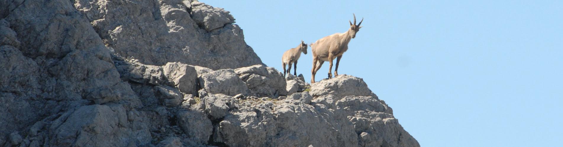 Wandern im Schweizer Nationalpark: Mit seinen 80 km Wanderwegen ist der Schweizerische Nationalpark ein absolutes Wanderparadies. Auf zu den schönsten Wanderungen!