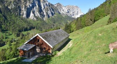 Wanderung auf das Hirzli, 1641 m.ü.M., von der Bergstation Morgenholz, oberhalb Niederurnen, im Niederurner Tal im Kanton Glarus