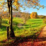 Warum verfärben sich die Blätter im Herbst? Die Photosynthese einfach…