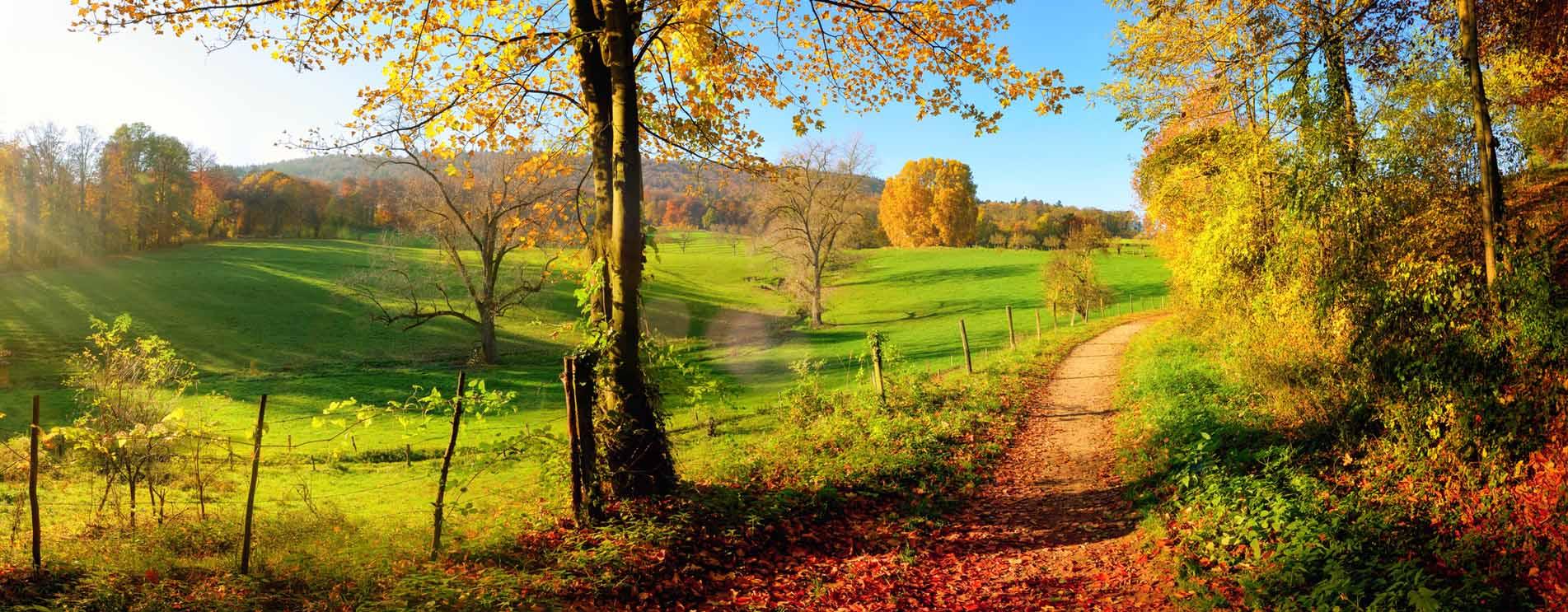 Warum verfärben sich die Blätter im Herbst? Die Photosynthese einfach erklärt.
