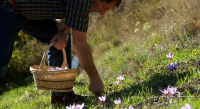 Wanderung von Eggerberg zu den Safranfeldern von Mund VS