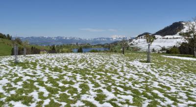 Wanderung von Samstagern via Hüttnersee auf den Rossberg, 1011 m.ü.M., mit Ziel in Schindellegi-Feusisberg