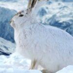 Tierspuren im Schnee lesen