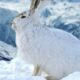 Tierspuren im Schnee – Den Wildtieren auf der Spur im Winter