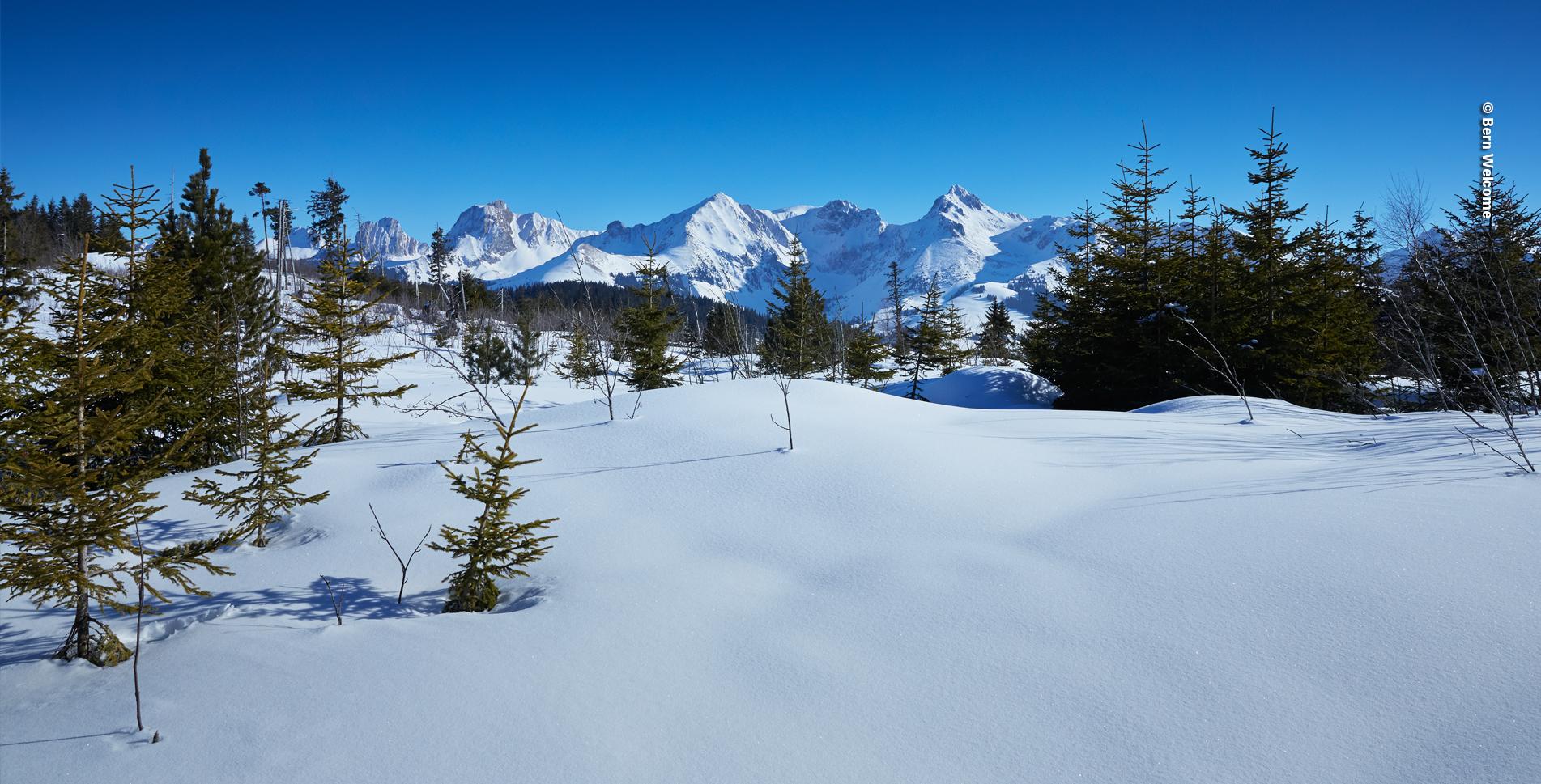Schneeschuhtour im Naturpark Gantrisch, Gantrischgebiet, von Gurnigel Stierenhütte auf den Selibüel und wieder zurück nach Gantrisch