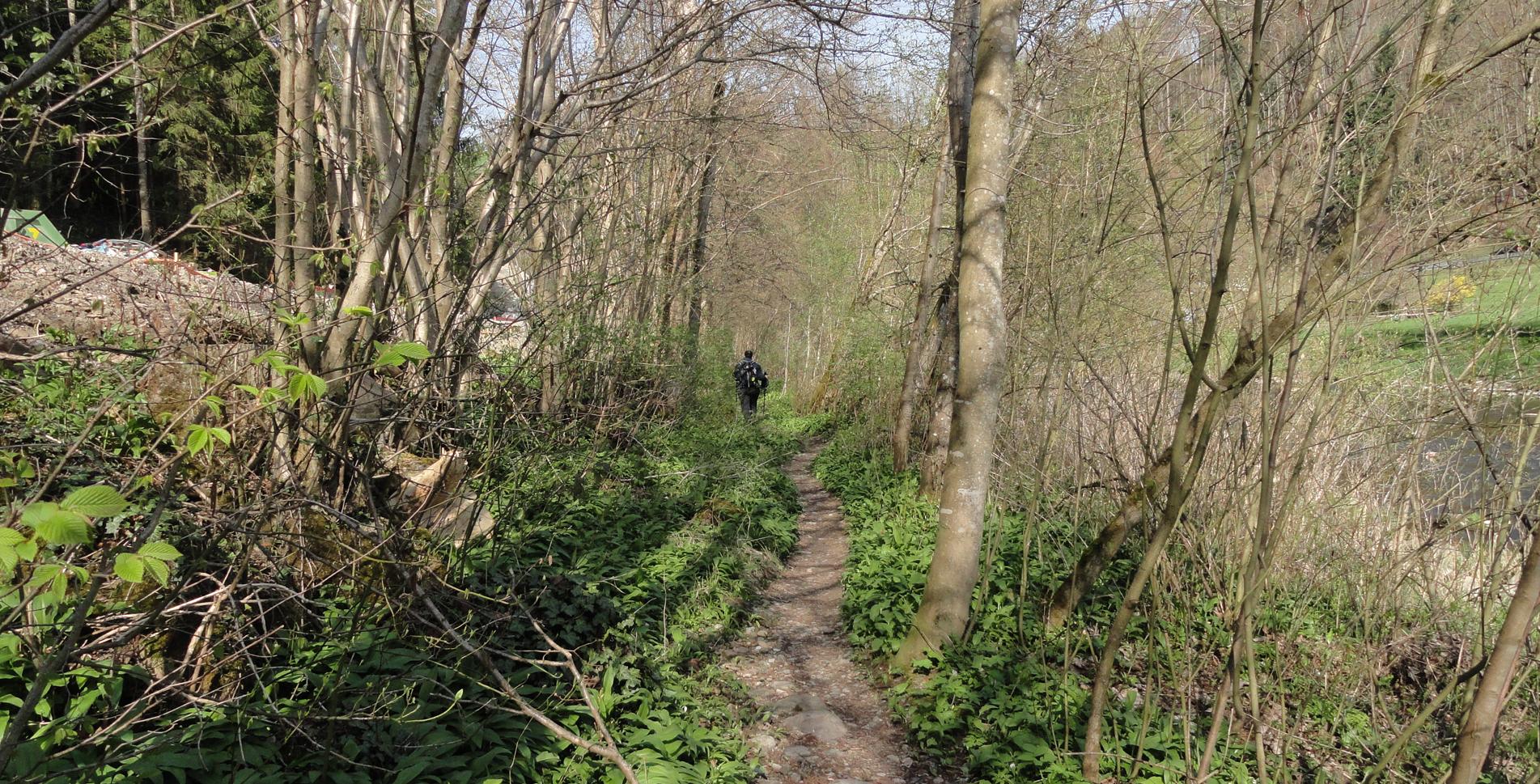 Wanderung im Sihlwald: Sihlbrugg Dorf – Sihlmatt – Sihlbrugg Dorf
