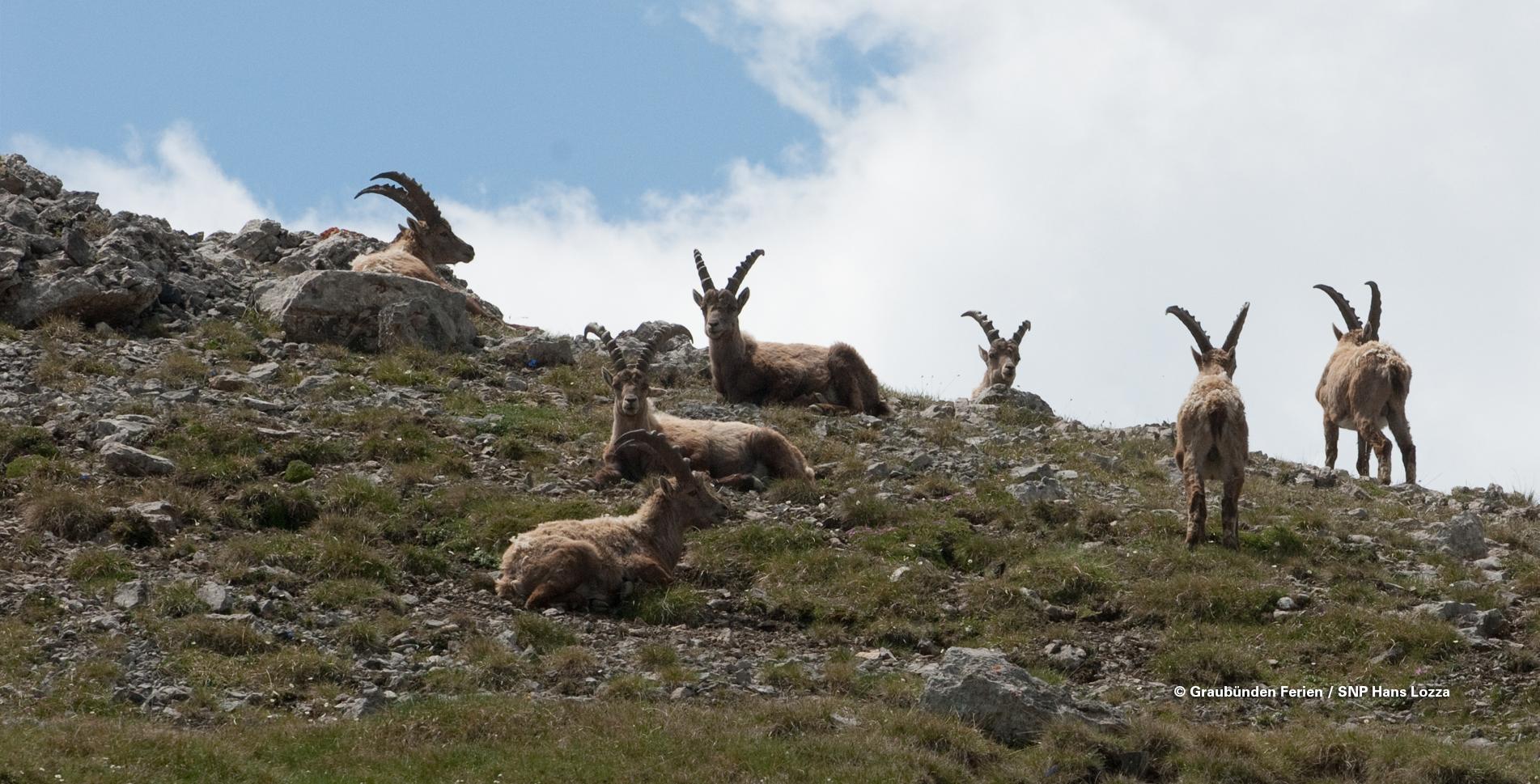 Nationalparkwanderung vom Ofenpass nach Il Fuorn