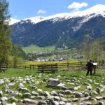 Val Müstair / Münstertal: Fuldera – Santa Maria – Müstair