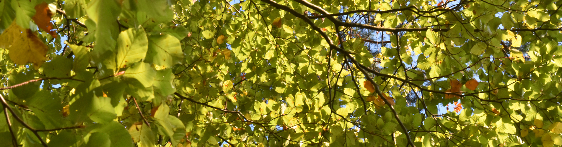 Blätter, Bäume, Wälder – Mehr Wissen