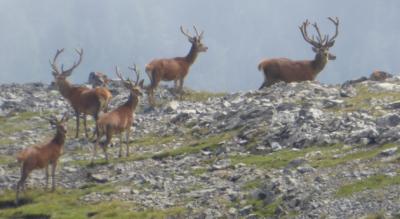 Wanderung von Zernez zur Chamanna Cluozza, Clopzzahütte, ins Val Cluozza und ins Val dal Spöl