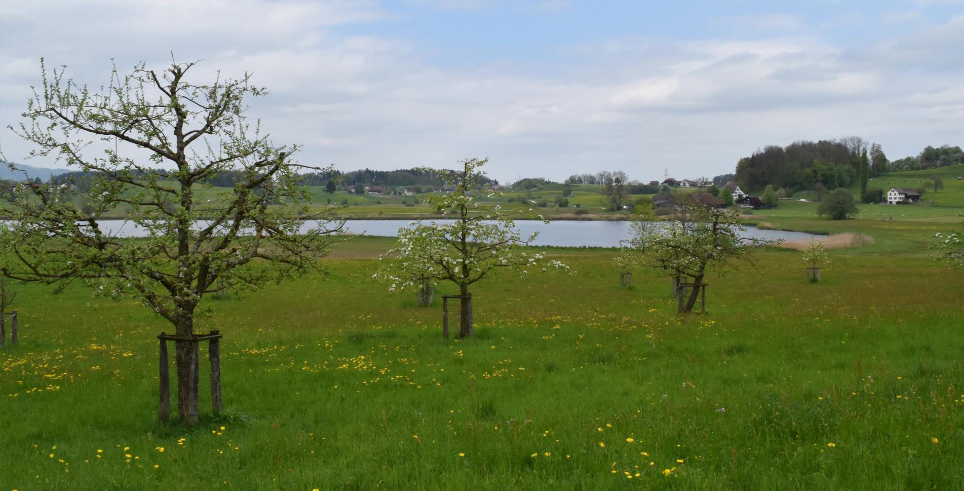 Wanderung von Grüningen im Zürcher Oberland zum Botanischen Garten und zum Lützelsee mit der Stochensiedlung und weiter via Hombrechtikon nach Feldbach am Zürichsee