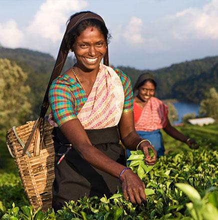 Wandern auf Sri Lanka, auf einer geführten Wanderreise / Wanderferien die Insel erkunden