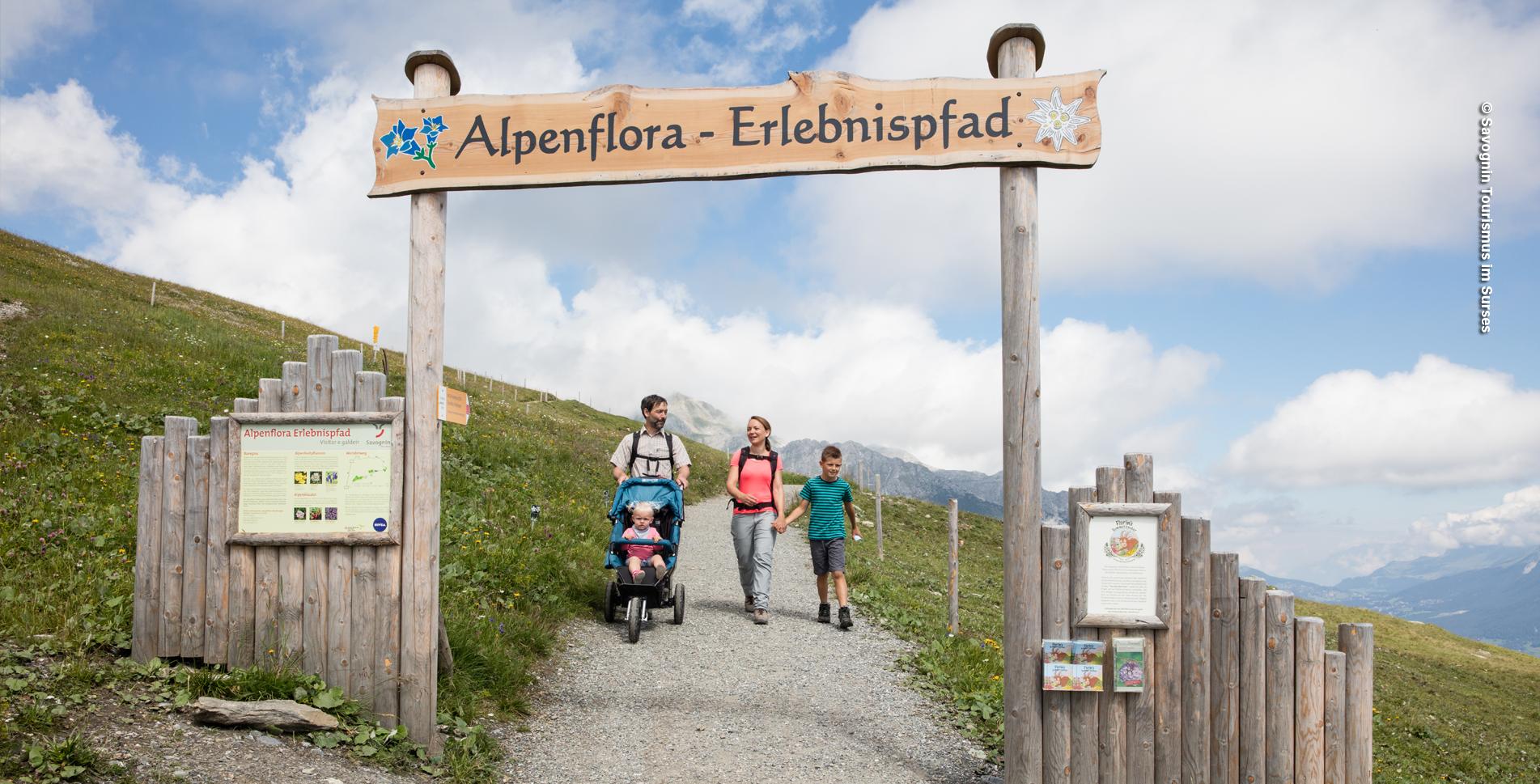 Wanderung auf dem Alpenflora-Erlebnispfad, oberhalb Savognin, von Somtgant via Mot Laritg, Lai Lung, Plaz Fravesch nach Tigignas