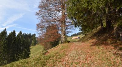 Wanderung von Malosen im Alptal via, Gadä Beiz, Berggasthaus Haggenegg, Mostelegg, Berggasthaus Herrenboden, Sattel / Sattel-Hochstuckli, Mäderen nach Rothenthurm