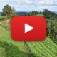 Film zur Wanderung im Zürcher Oberland von Gfell zum Berggasthaus Hörnli und weiter nach Steg im Tösstal