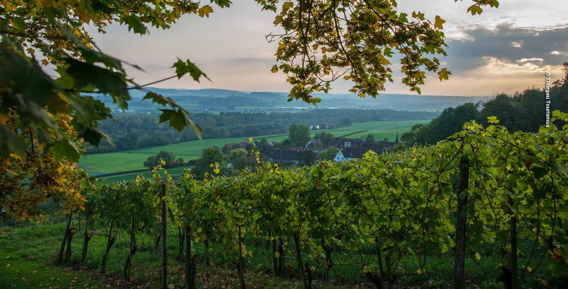 Wanderung in Thurgau von Nussbaumen TG via Nussbaumersee, Hüttwiilersee, Hasesee zur Kartause Ittingen und weiter nach Frauenfeld