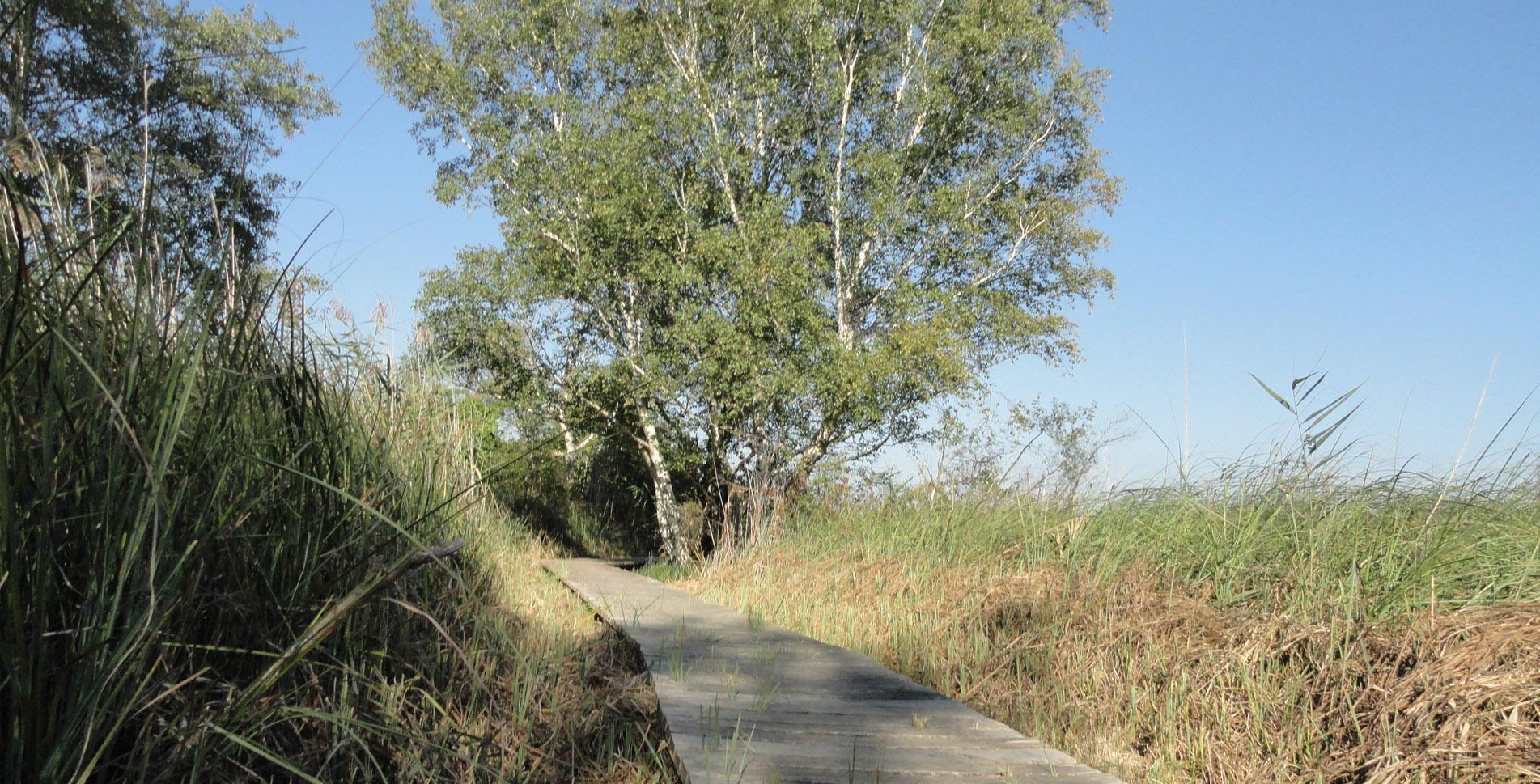 Wanderung von der St. Petersinsel im Seeland, im Bielersee, über das Kloster nach Erlach