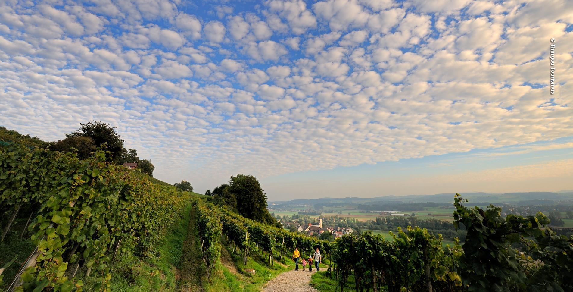 Wanderung auf dem Thurgauer Rebenweg von Oberneunforn via Iselisberg, Kartause Ittingen in Warth und weiter nach Frauenfeld