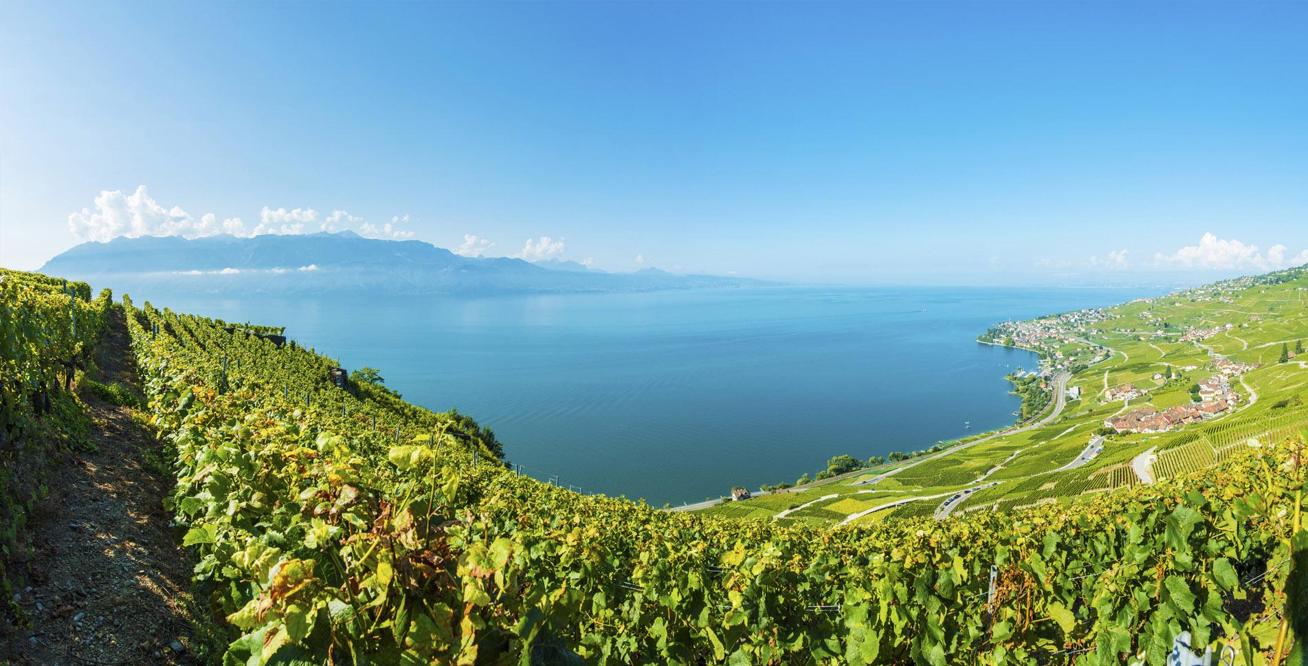 Wanderung entlang der Terrasses de Lavaux, den Weinterrassen von Lavaux, die zum Welterbe der UNESCO gehören, von St. Saphorin nach Lutry am Lac Léman / Genfersee.