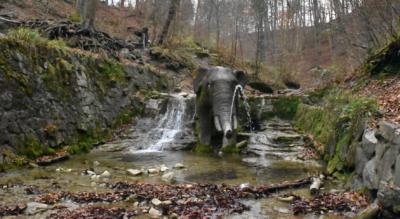 Wanderung von Zürich Burgwies via Elefantenbach, Elefantenbachweg –, Elefantentobel, Stöckentobel, Witikon, Trichtenhausen / Trichtenhausenmühle, Werenbachtobel zurück nach Zürich Burgwies