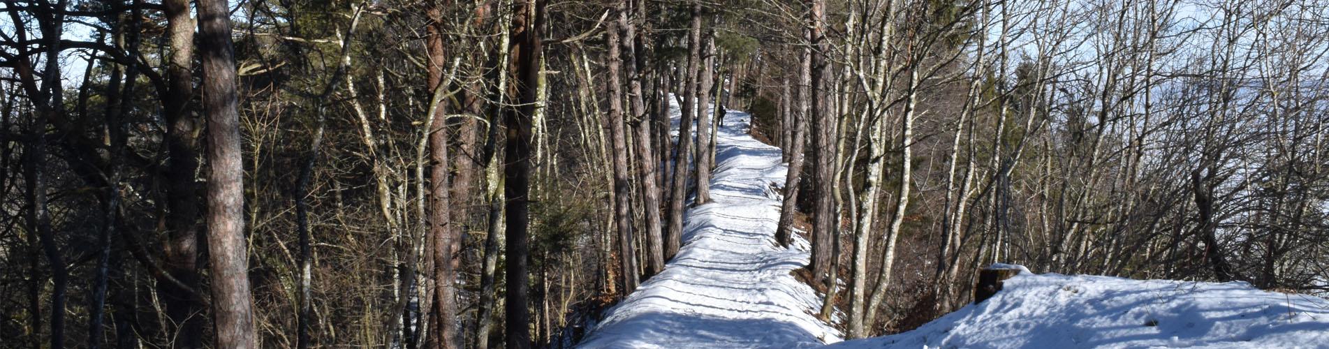 Winterwanderungen und Schneeschuhtouren