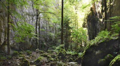 Wanderung durch die Wolfsschlucht im Naturpark Thal nach Welschenrohr mit Abstecher zum Bärenloch. Der Wanderweg führt via Obere Tannmatt, Mieschegg, Hinter Brandberg.