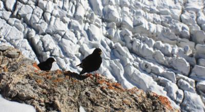 Wanderung / Tour von der Station Eigergletscher zur Guggihütte in der Jungfrauregion welche nahe am Eiger, Mönch und Jungfrau liegt